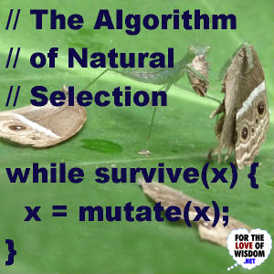The Algorithm of Natural Selection