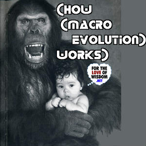 How Macroevolution Works